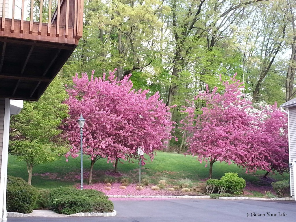 Spring in NJ