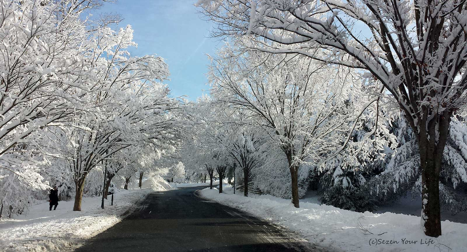 Winter Road by Sarah Franzen